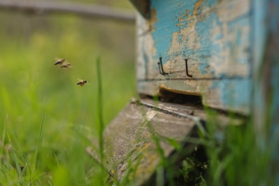 Quickly and without any thought for the consequences, our local honey bee population recently crashed, with hundreds of bees reportedly plummeting to the bottom of the hive, just like that...
