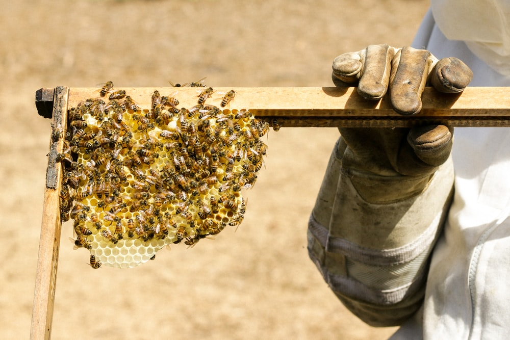 person holding beehive