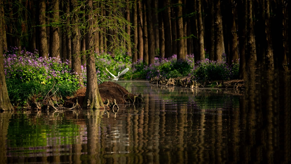 white bird perched on rock in river surrounded with trees