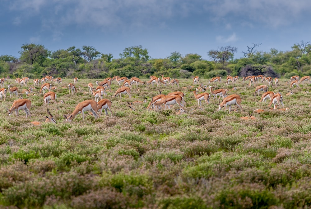 group of deer in forest