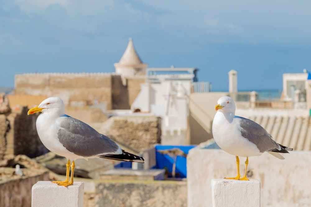 white-and-grey birds on white surface during daytime