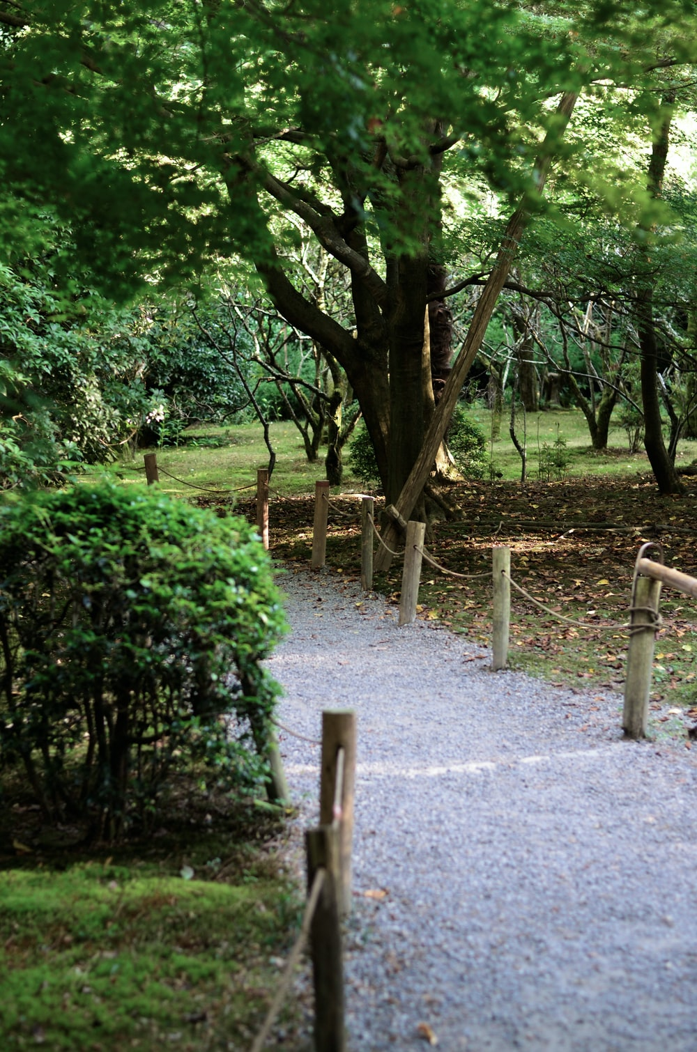 gray pathway near green trees