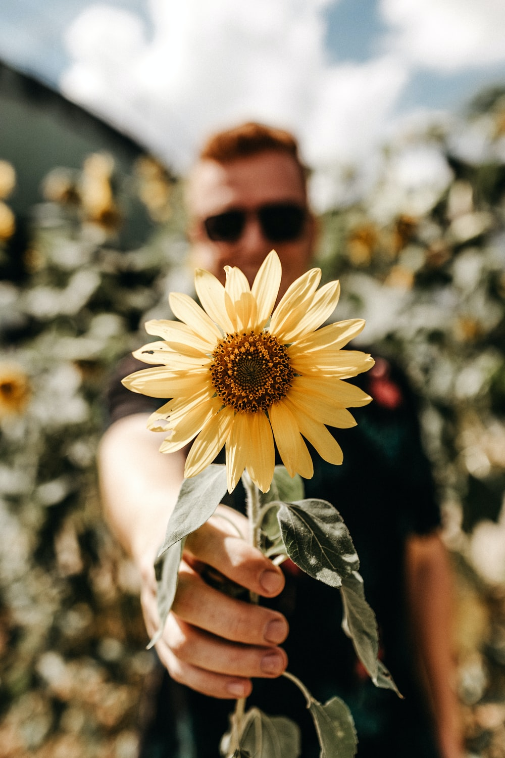 smiling man standing and showing yellow sunflower