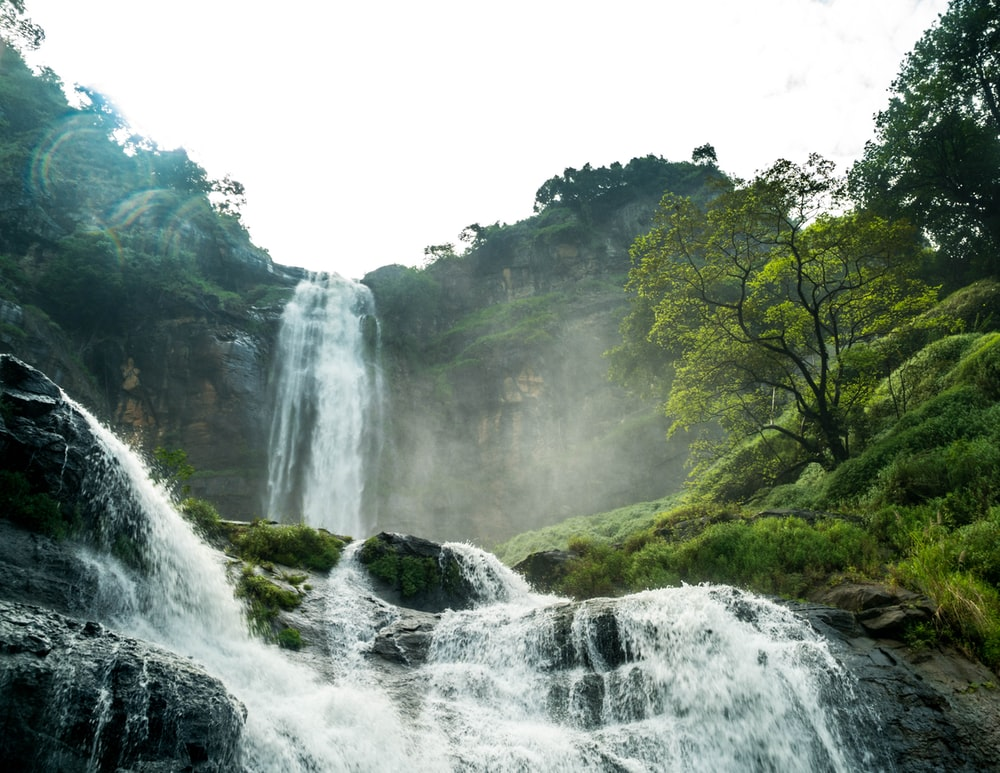 green trees beside waterfall during daytime