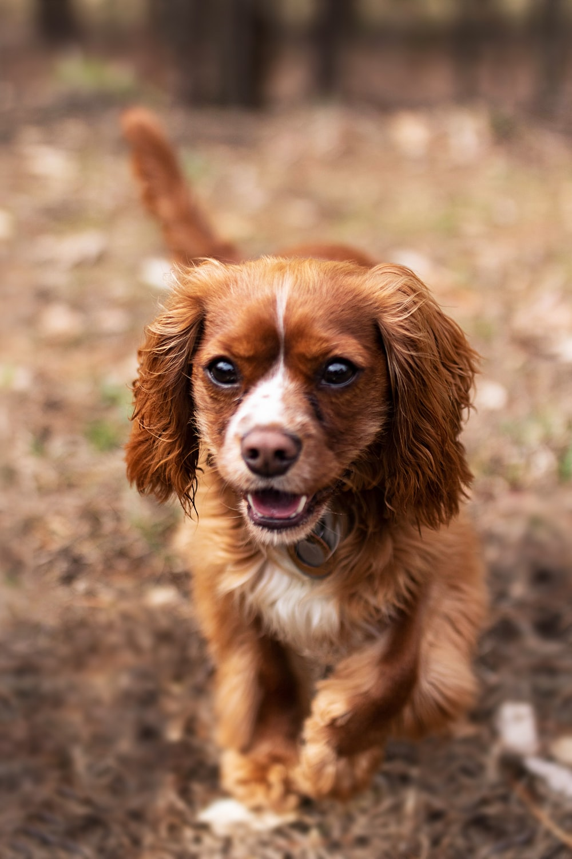 brown puppy walking on brown field