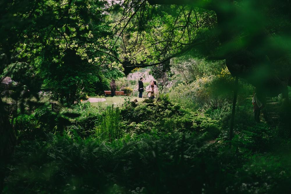 man standing in garden