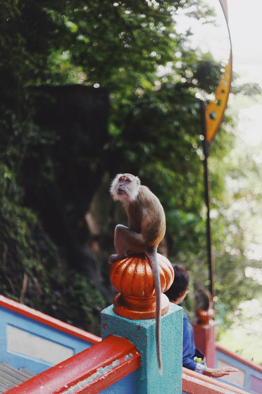 brown primate