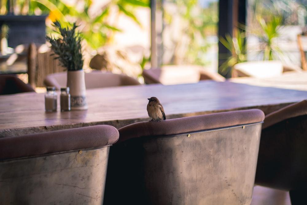 bird on chair backrest