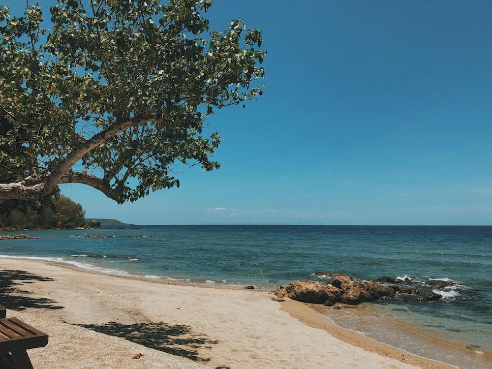trees on white sand