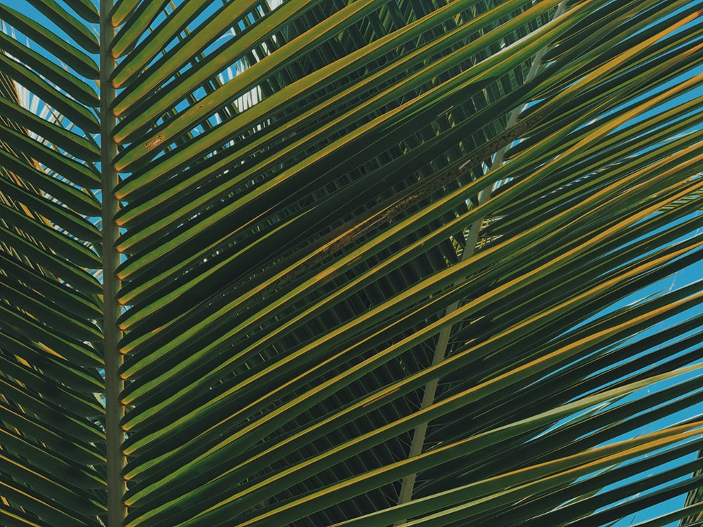 green coconut leaf