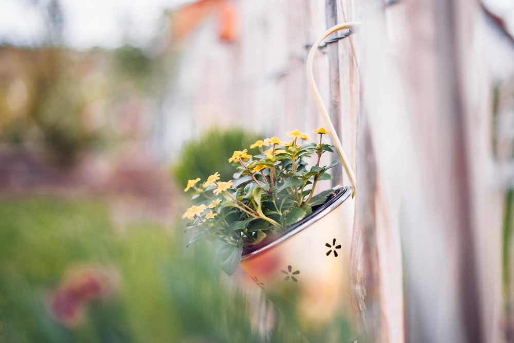 selective focus photography of hanged yellow petaled flowers