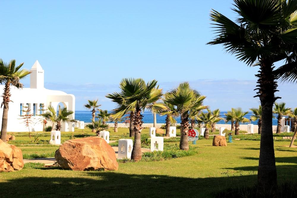 palm trees in green open field viewing blue sea
