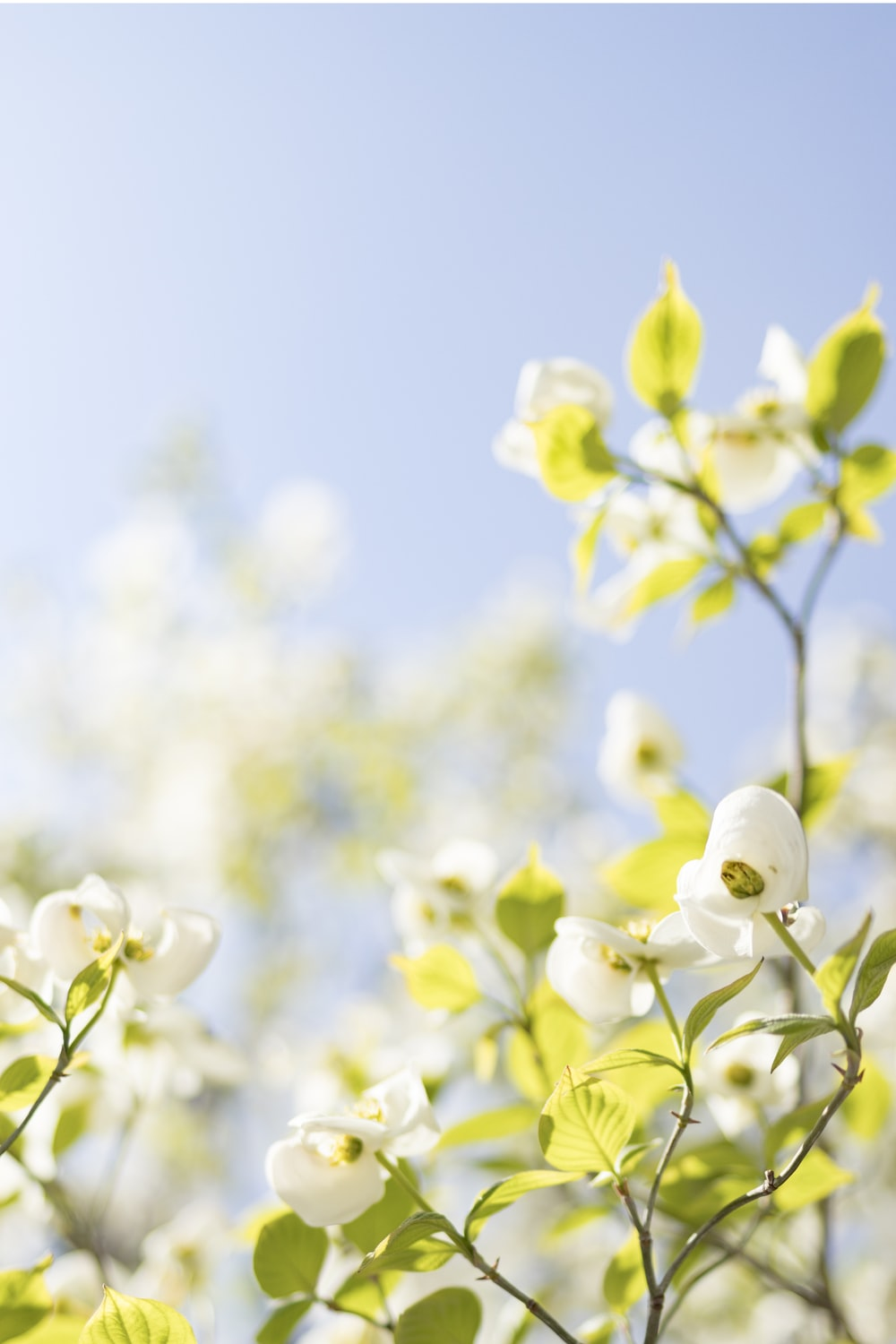 selective focus photo of white flowers