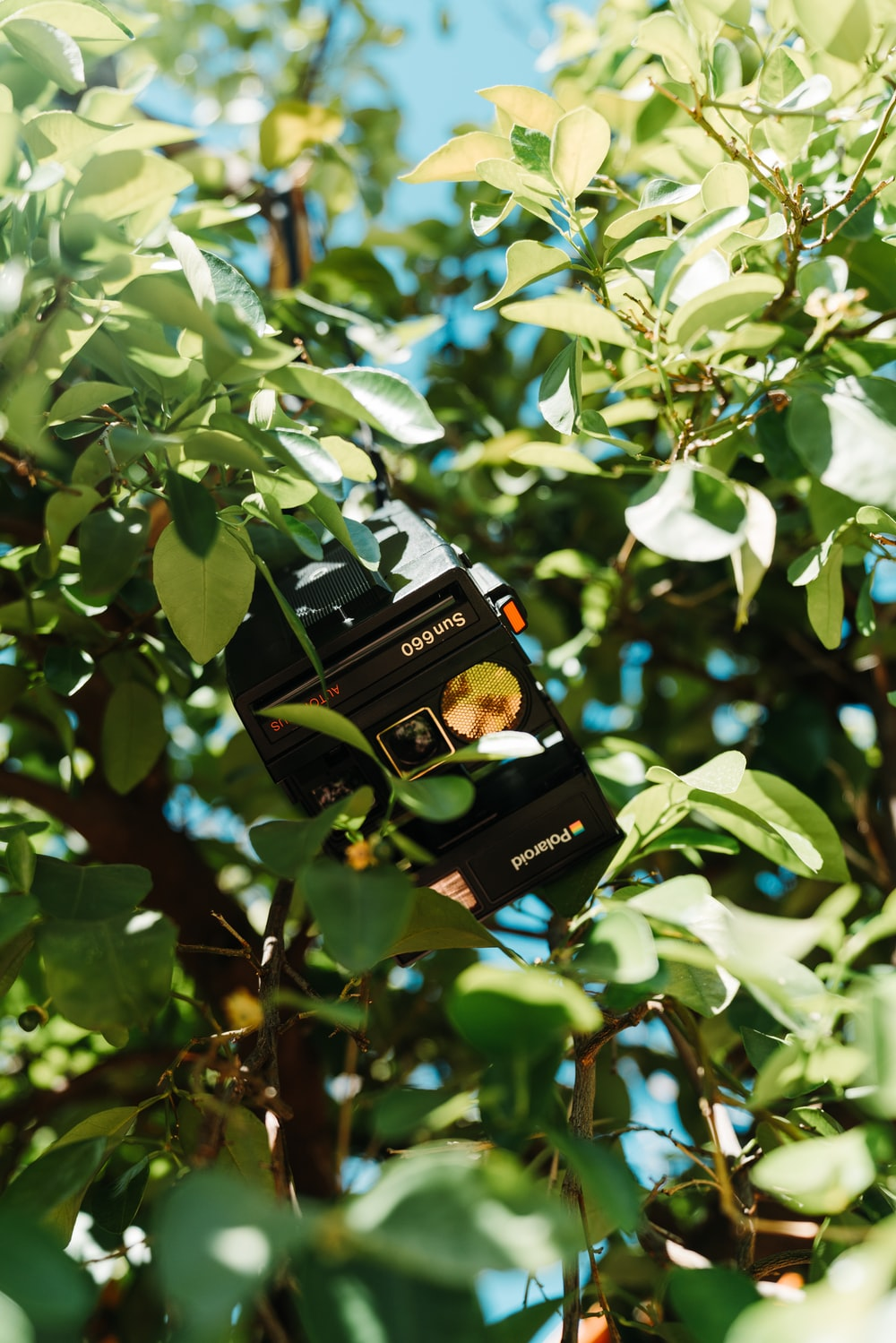 black camera on tree branch