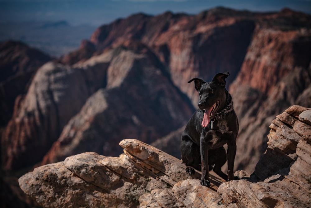 short-coated black dog sitting on mountain during daytime