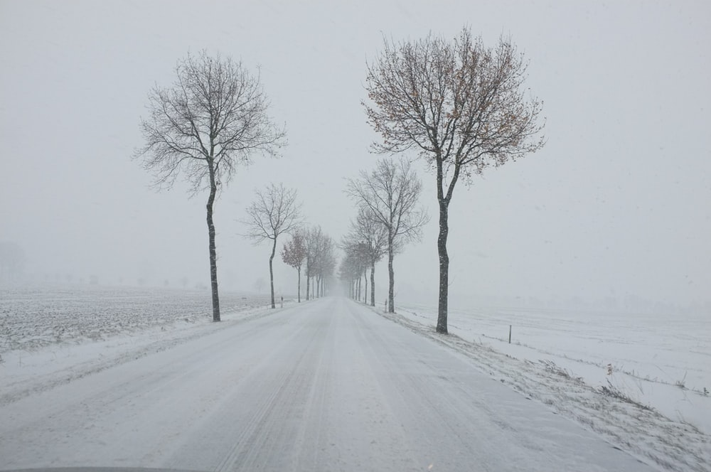 trees near road covered with snow