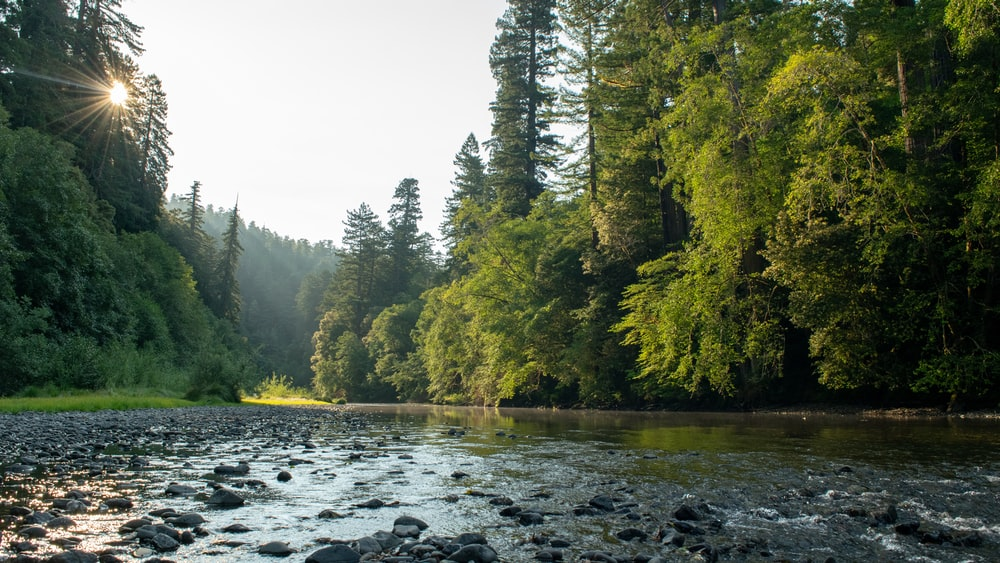 river surround by trees