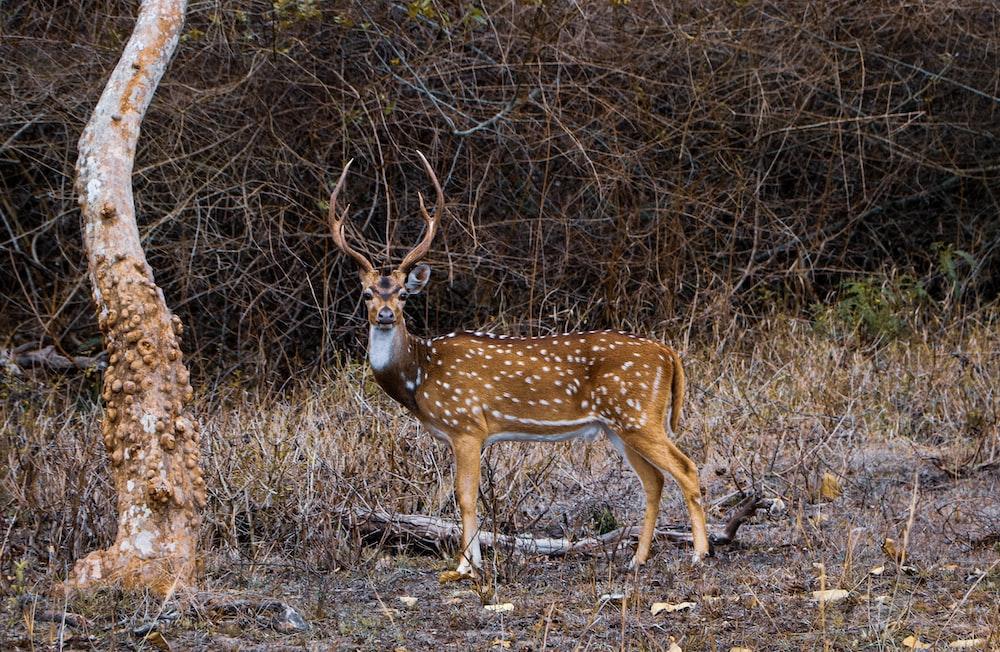 brown deer on focus photography