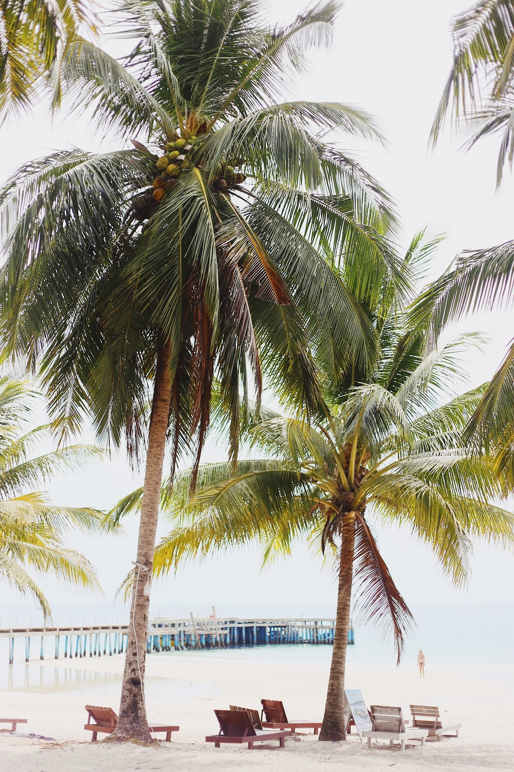 two green coconut trees