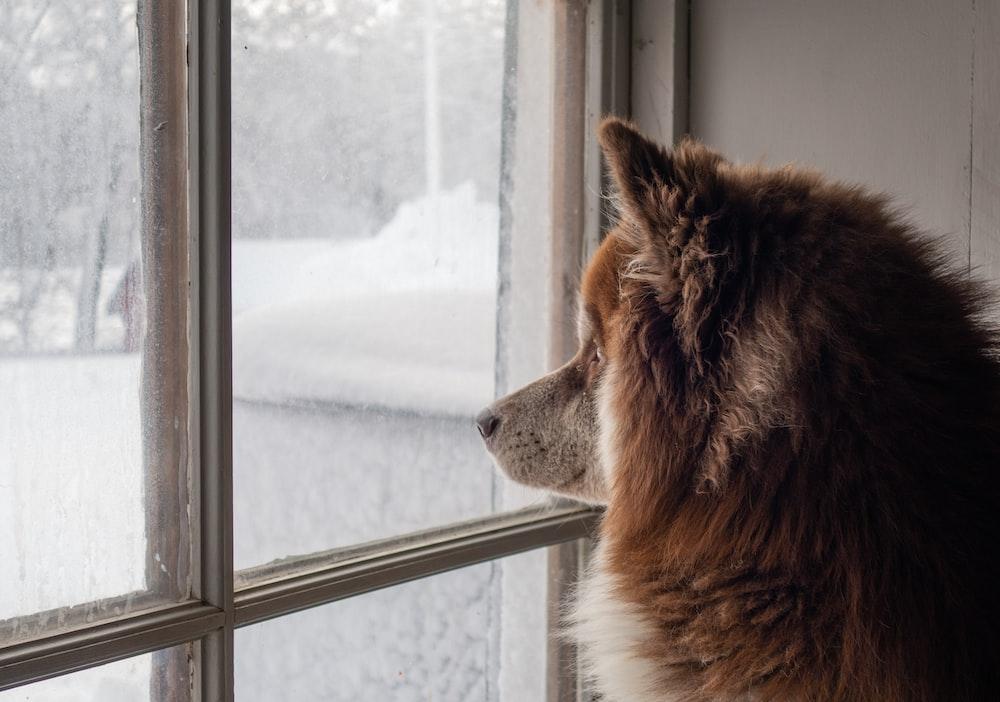 brown long-coat dog inside well lit room
