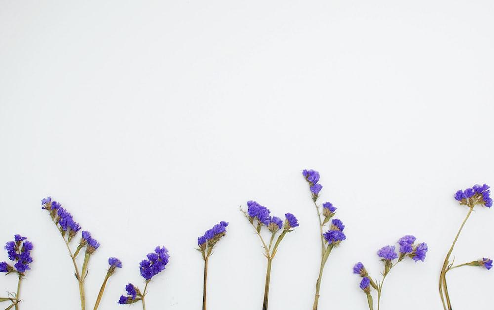 purple petaled flower plants