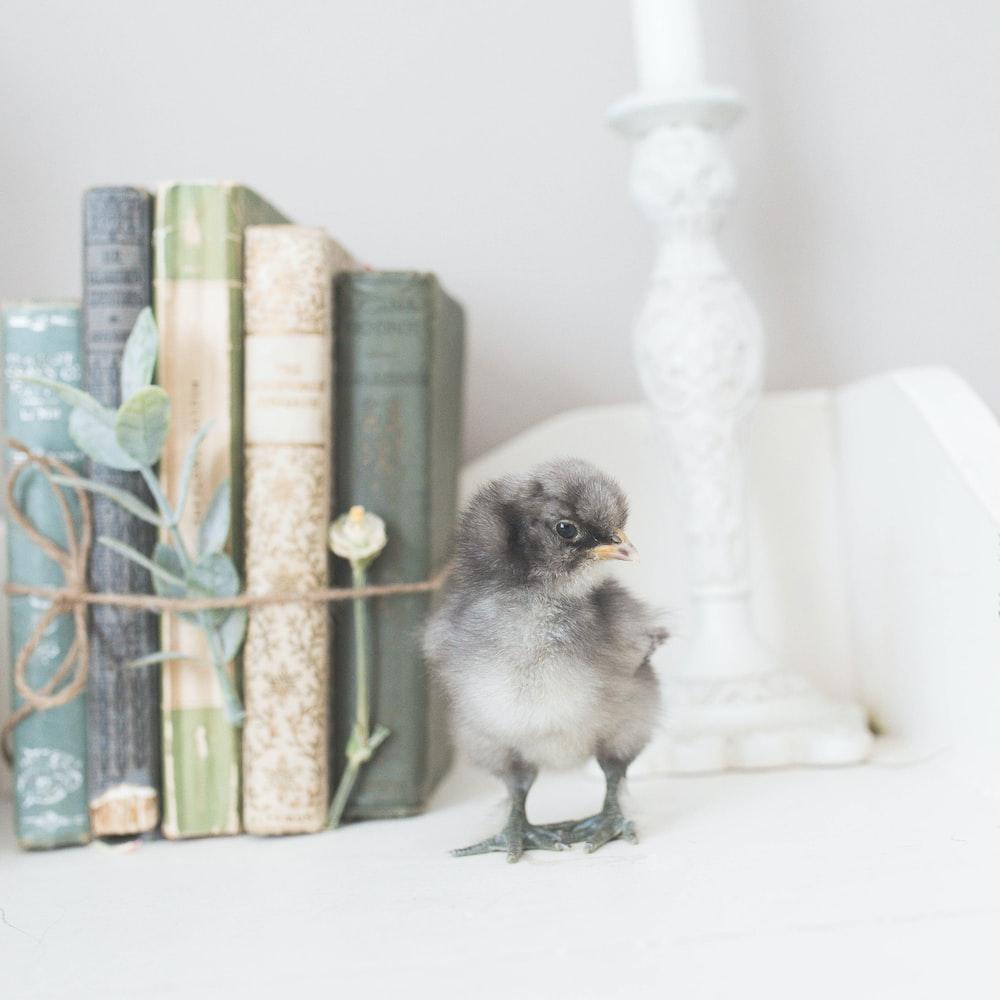 chick beside books