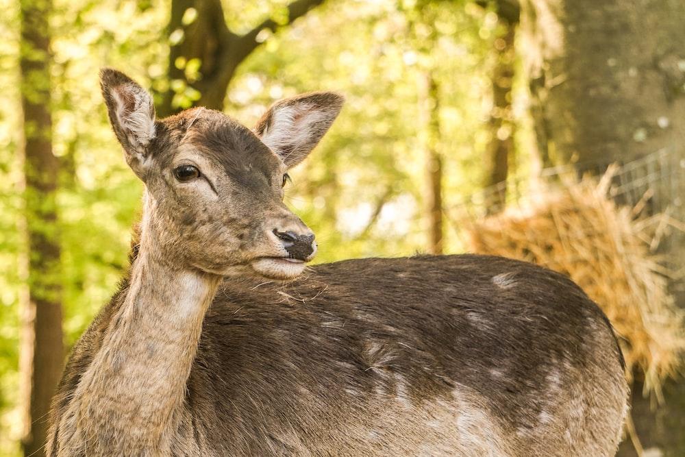 brown deer near trees