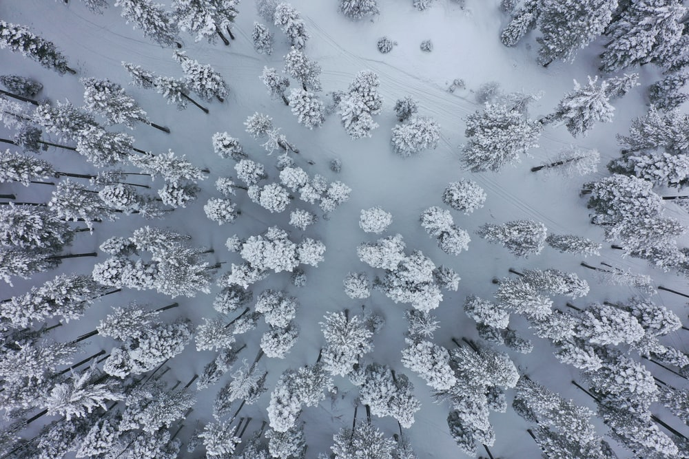 aerial view of icy pine tress