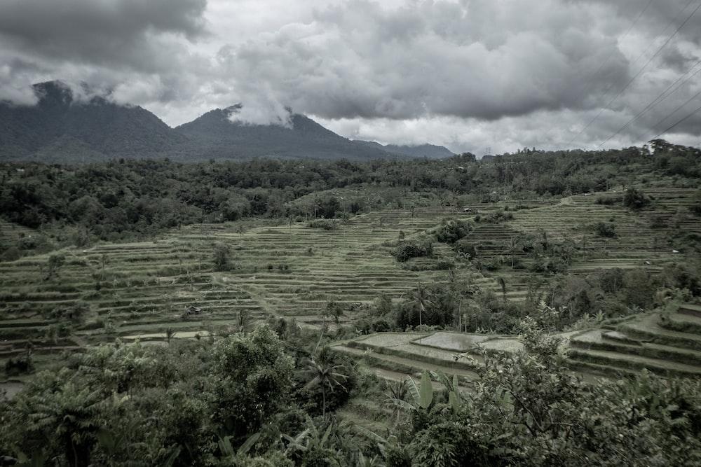 green crop field\