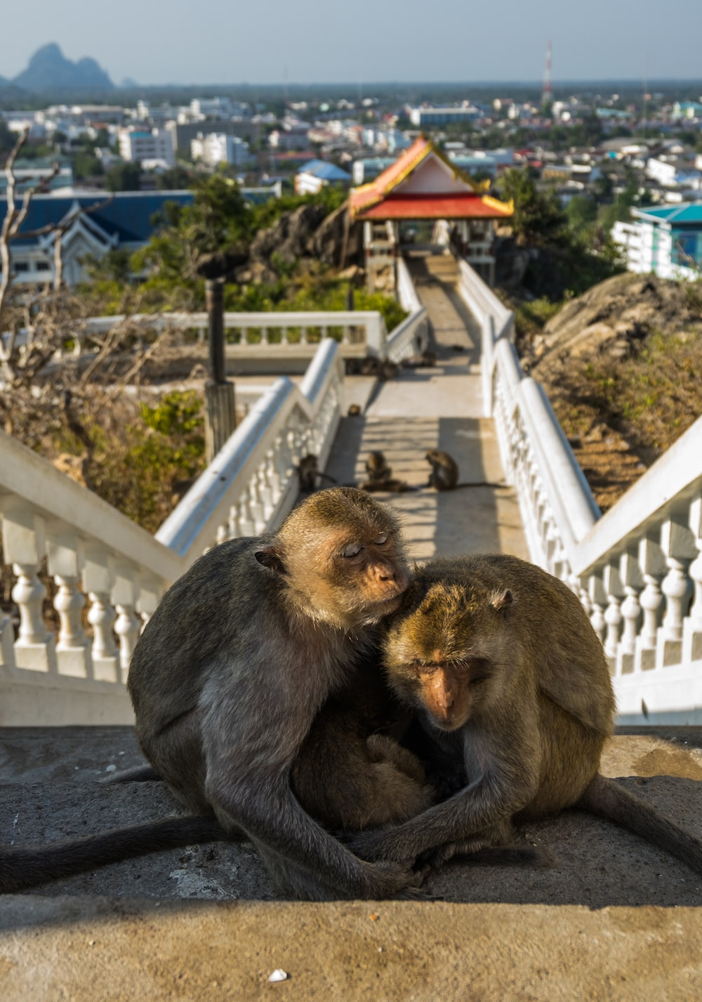 two brown primates