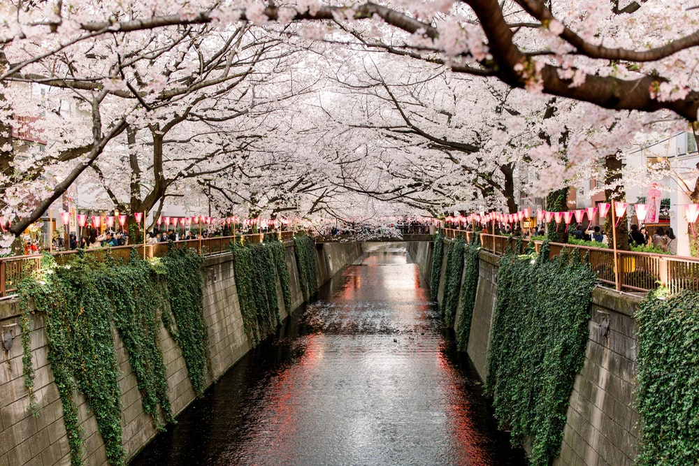 canal under white trees