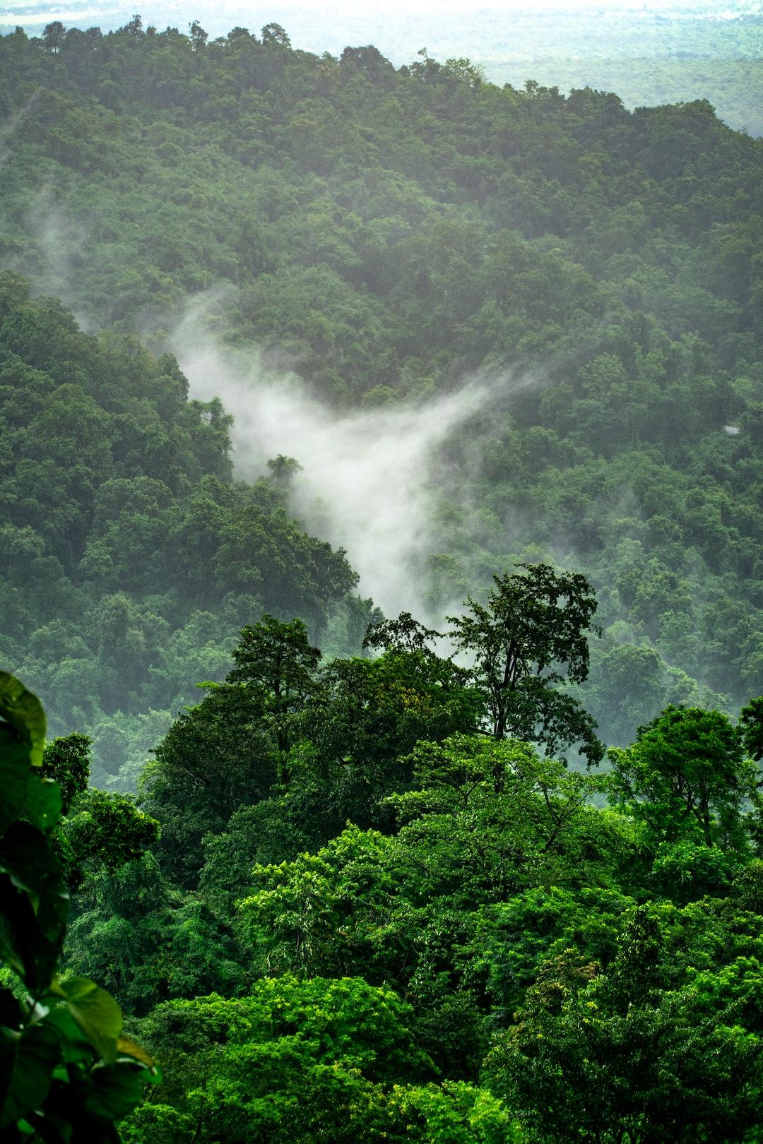 900 Jungle Background Images Download Hd Backgrounds On Unsplash