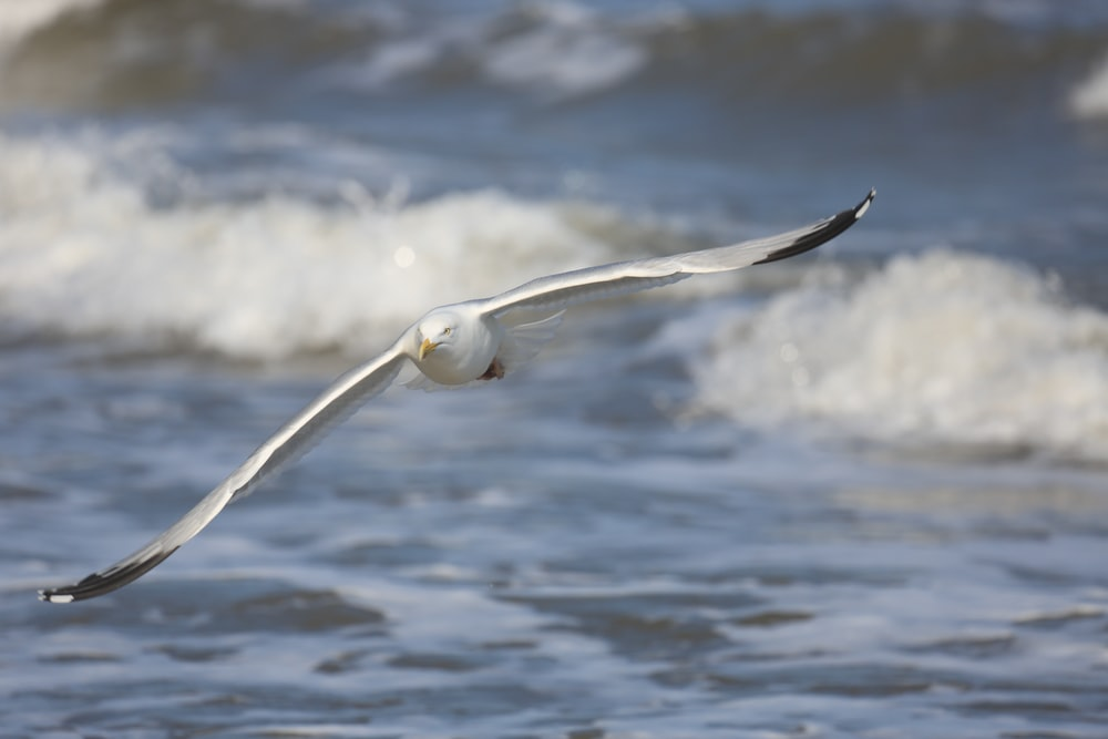 white seagull flying over body of water