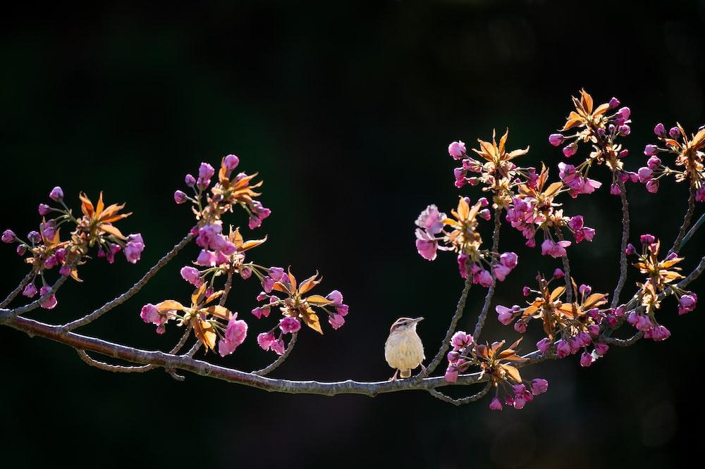 white bird surrounded purple petaled flower