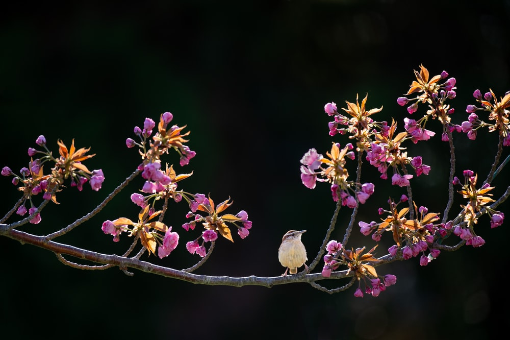 white bird surrounded purple petaled flower