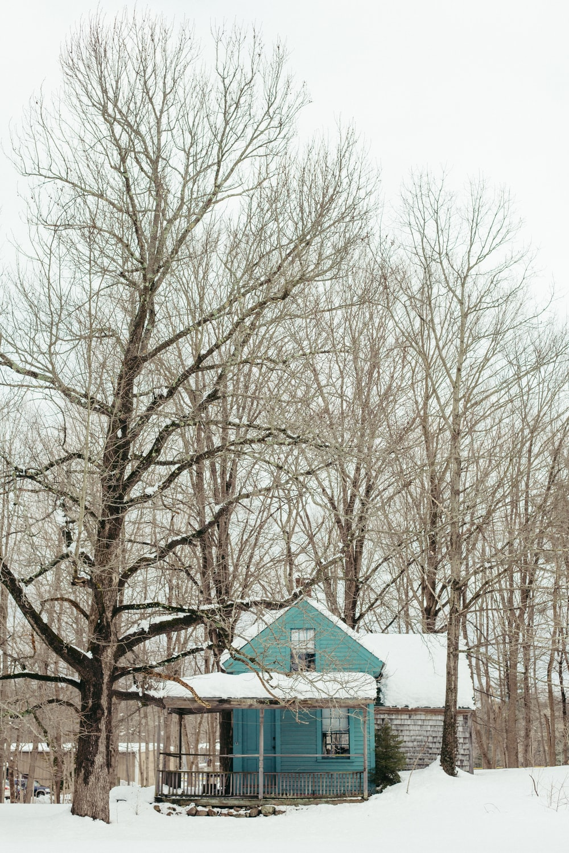 teal house near trees