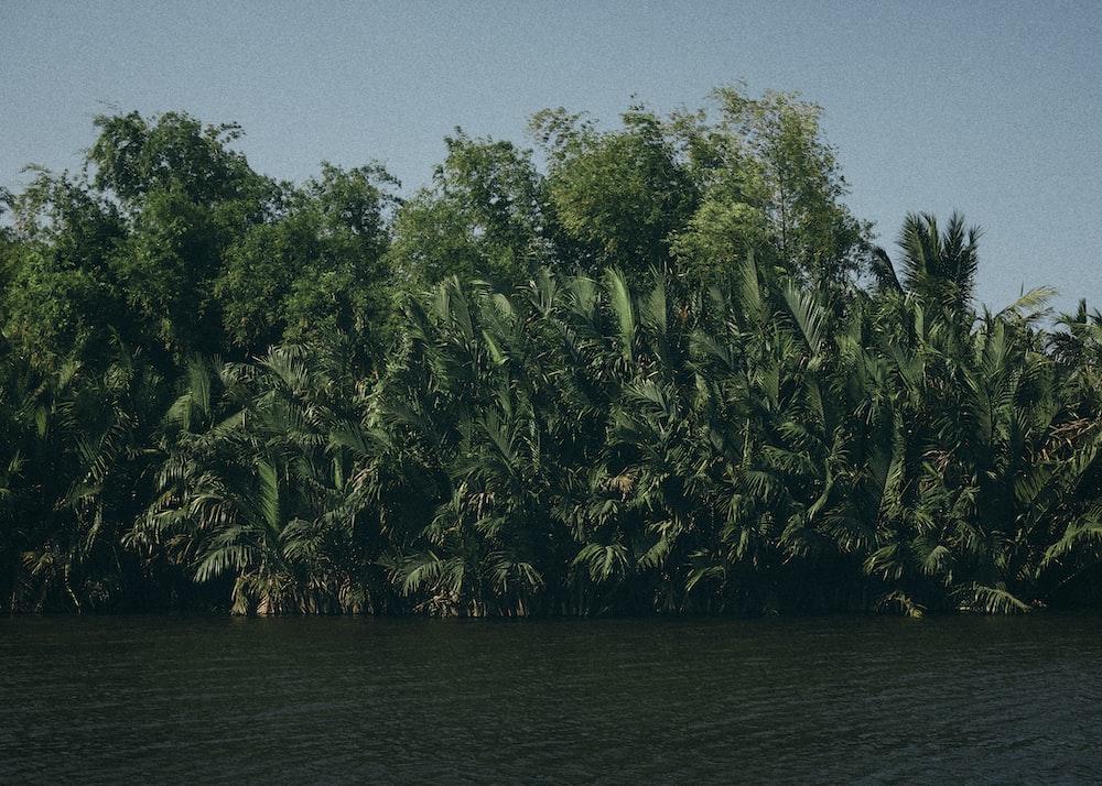 river near trees