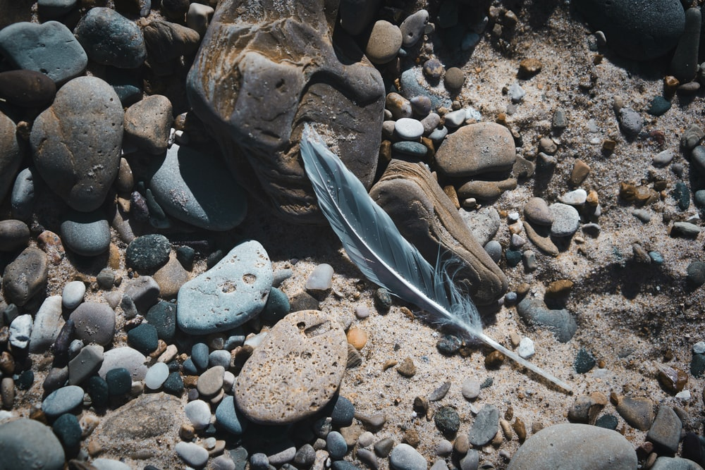 close-up photo of gray feather on rocks