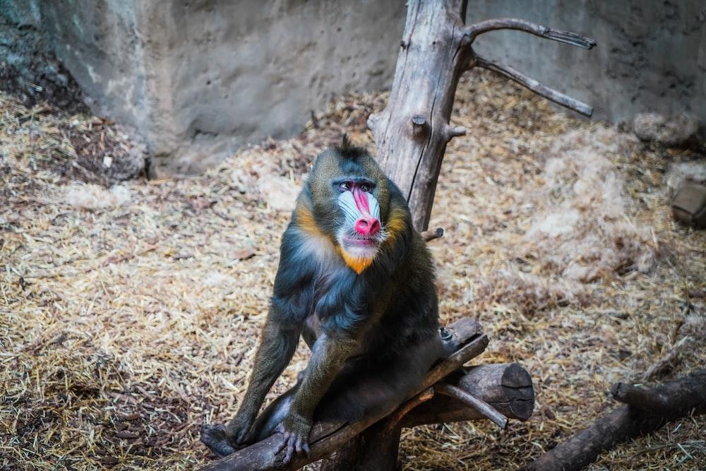 close-up photo of monkey sitting on tree branch
