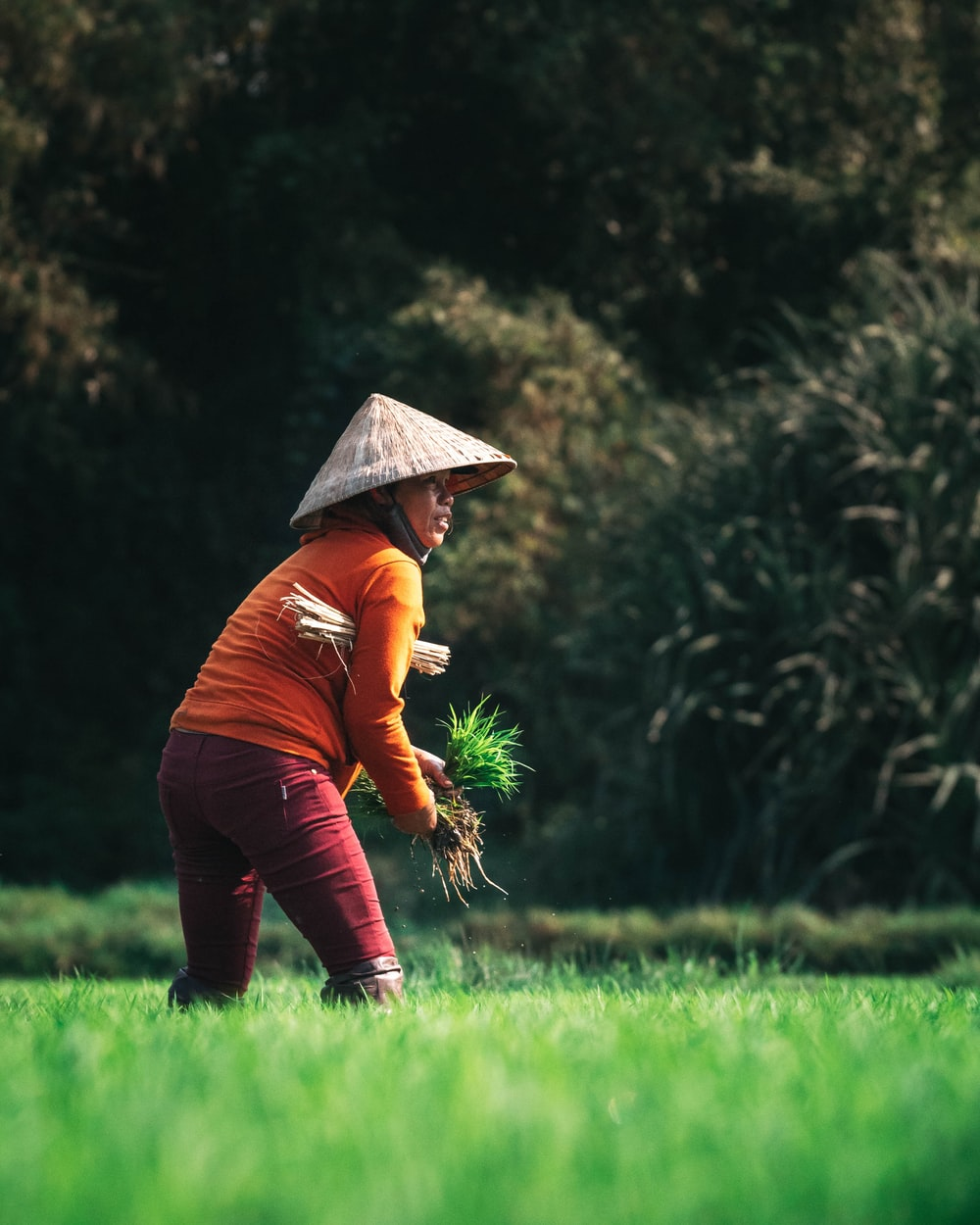 woman in orange sweater planting rice at the fields