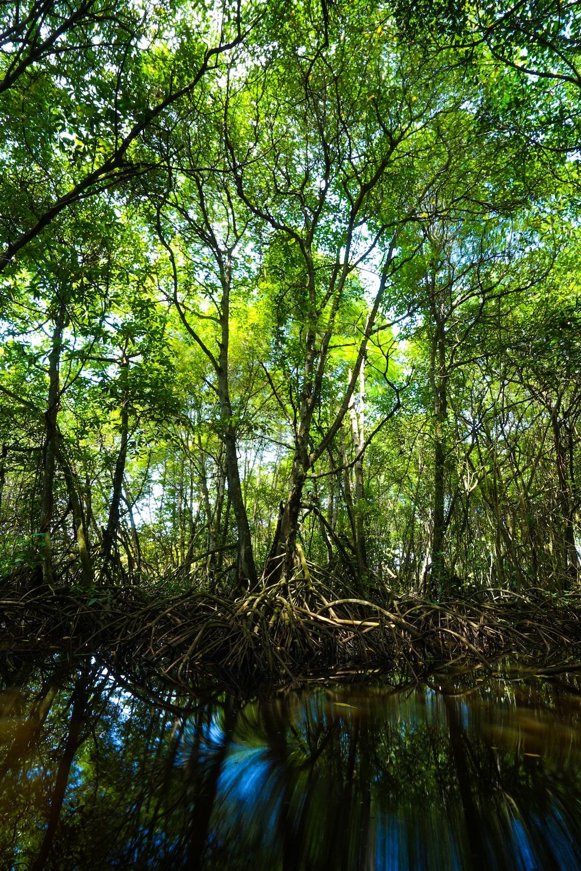 green leaf trees near body of water