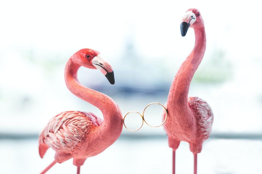 two pink flamingos holding wedding rings