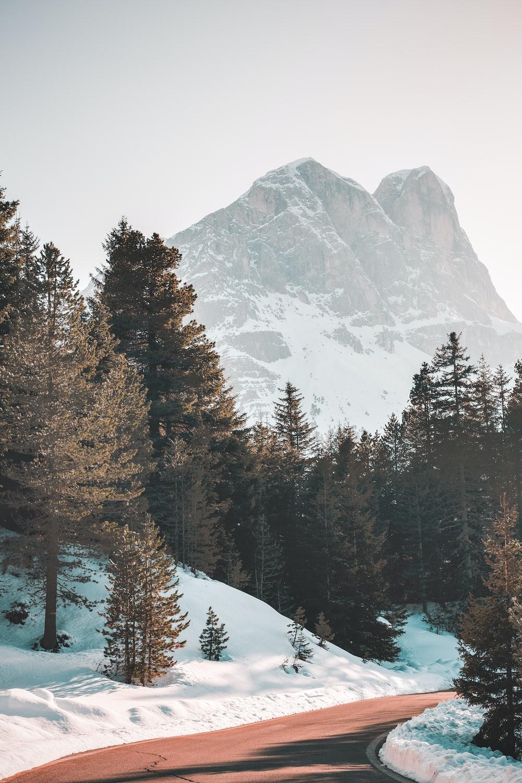 green pine trees across brown mountain