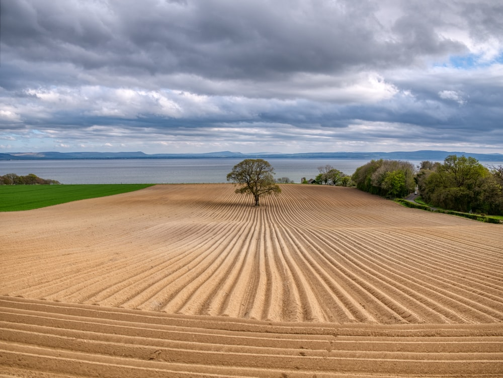 landscape photography of tree in the middle of mowed land