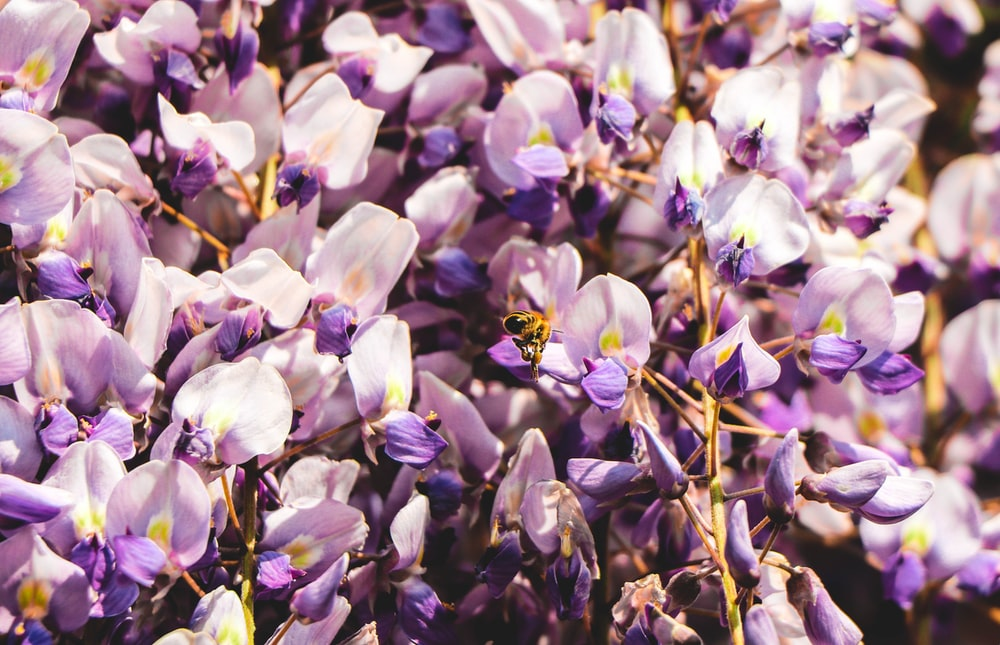 photo of purple and white flowers