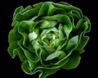 Falling Apart  lettuce stories