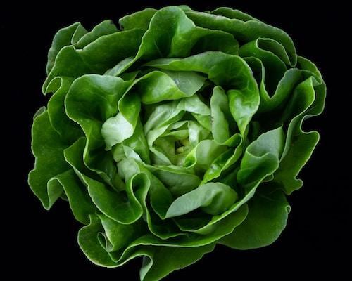 Vorspeisen / Antipasti -  Grüner Salat