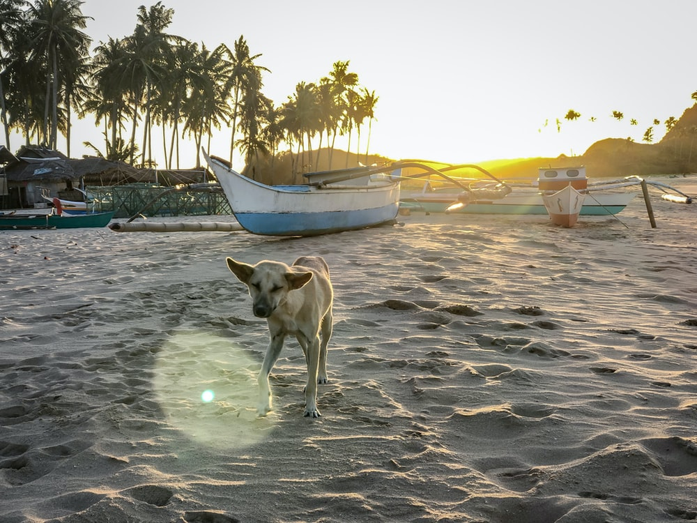 short-coated brown dog standing on sand near boats during daytime