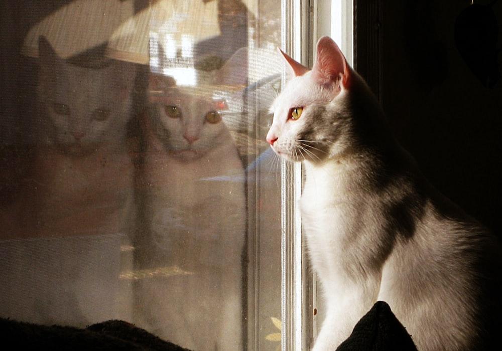grey cat standing in front of glass window