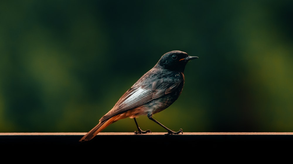 black and brown bird perched on wood railing